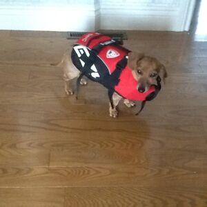 manteau d'hiver pour chien et divers accessoires