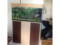 Fish tank and stand