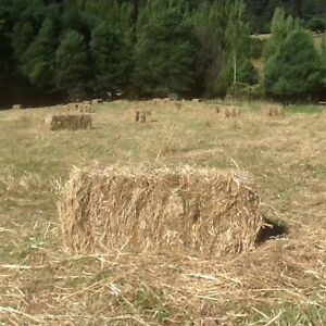 Hay Bales for Sale Freshly Cut Cygnet 250 available Cygnet Huon Valley Preview