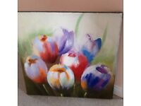 Large Tulip picture