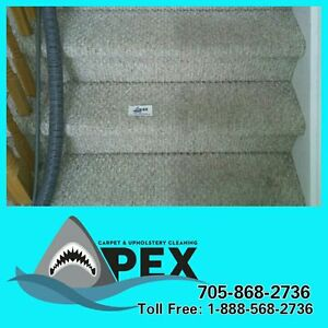 Apex Carpet and Upholstery Cleaning Peterborough Peterborough Area image 1