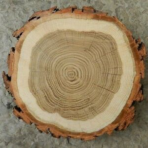 Wood slices / wood rounds / wood slabs / wood cookies