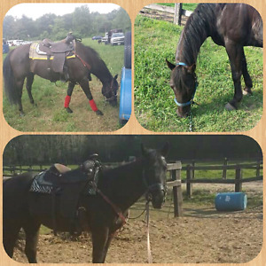 Looking for my old horse i sold