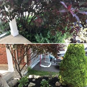 Ann's Landscaping plus lawn cuts! 100% satisfactions