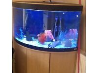 Large corner fish tank and matching cabinet
