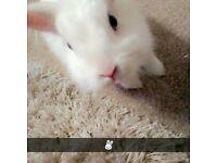 **NOT FOR SALE** stolen white female rabbit on the 11/12/17