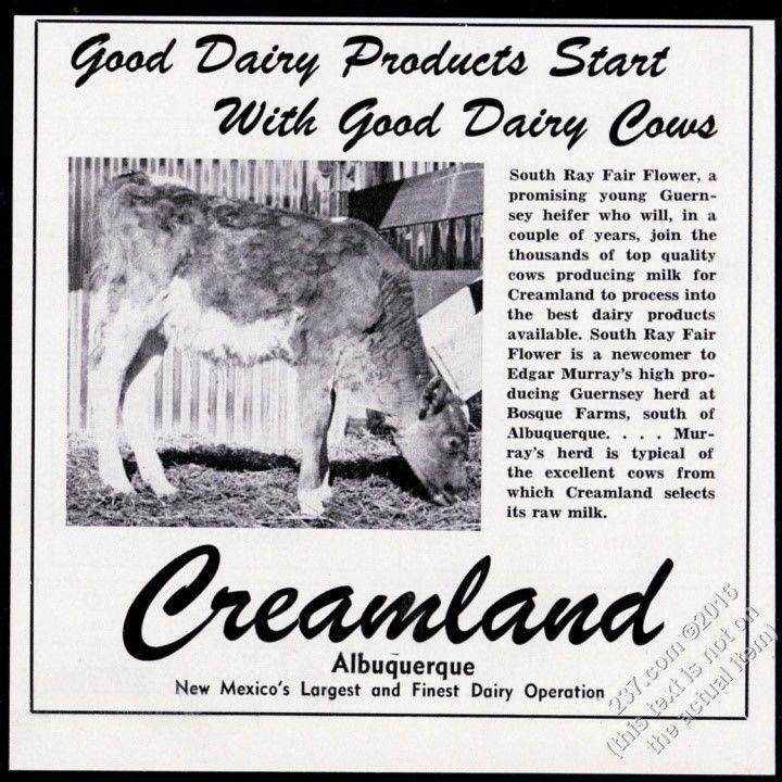 1950 Guernsey cow photo Creamland milk ice cream Albuquerque New Mexico print ad