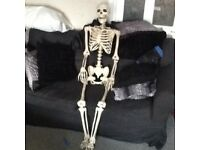 Life-sized Halloween skeleton!