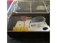 Medium plastic hamster home, black base with clear top. (H 26cm X W 38cm X D55cm)