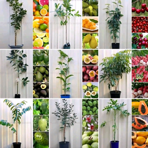 Assorted Fruit Trees From $10 each Plants