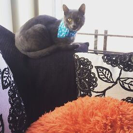 8 month old male cat