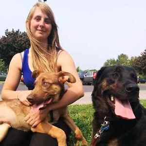 I Let The Dogs Out, pet sitting service Cornwall Ontario image 1