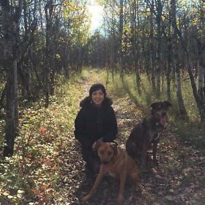 Dog sitter available in Dawson Creek