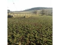 Horses field and stables to rent-up to 2 horses-dry shelter/store-£25/week/horse-1.6 acres in total