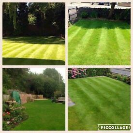 Get Your Lawn Weed Free, Clear Of Moss This Year - Lawn/garden treatment specialists.