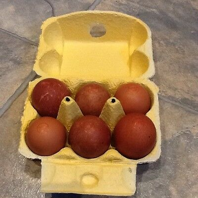 20 Heavy Duty YELLOW Half Dozen Rainbow Cardboard Egg Boxes (M/L) Pack