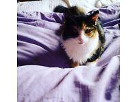 Missing 11 month old kitten/cat