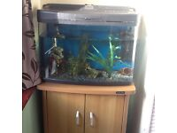 Fish tank, 80 litres,two fish,and stand