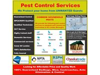 100% Guaranteed Pest Control Mice|Bedbugs|Cockroaches|Ants|Wasps Seven Sisters Tottenham Wood Green