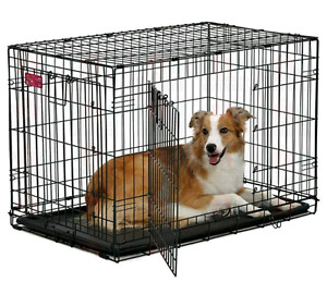 """Dog Crate - Midwest Life Stages 36"""""""