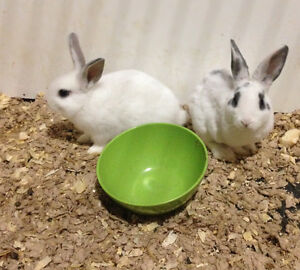 rabbits looking for a home
