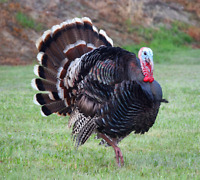 Looking for land use for turkey hunting