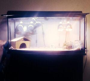 Reptile terrarium tank and lighting