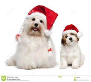 Dog Grooming By Discount Doggy, Small Only $40 Tx Inc.