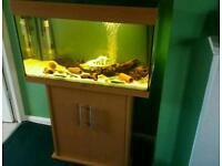Juwel rio 125 full set up