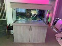 Aquarium Seashell Aquarium & Cabinet 300L 4f in Urban Oak & Cabinet 300L 4f in Urban Oak