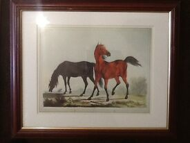 Horse. Danish warmblood prints.