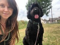 Stacey's Pet Care dog walker pet sitter Bristol