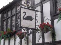 Black Swan Darts Team