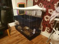 Free rabbit and cage