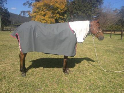 Horse Rugs New Ripstop Unlined Canvas Australian Made Special Jilliby Wyong Area Preview