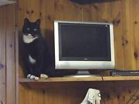 cat needs a new home