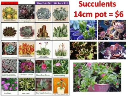Cheap PLANTS in 14cm Pot Just - $6 Each Jandabup Wanneroo Area Preview