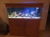 Marine Fish Tank (full set up)