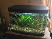fish tank 40L litre aquarium panorama tropical