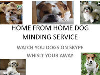 pet sitters pet sitting pet dog minding boarding professional home from home over 20years experience