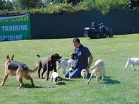 Dog Training classes or residential Dog Training