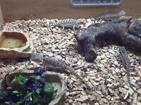 Reptile food £2 a box