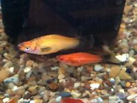 Lots of tropical fish for sale
