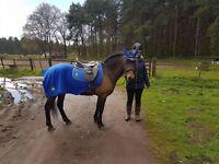 Pony for sharer