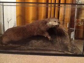 Taxidermist Dog otter