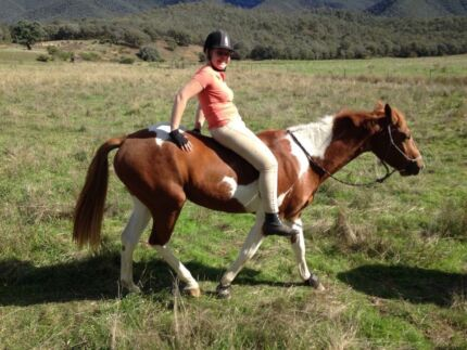 Qh x pinto your next best friend  Churchill Latrobe Valley Preview