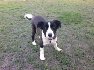 Lost Dog Maryborough Fraser Coast Preview