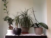 Various house plants