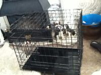 DOG CAGE FOR MEDIUM SIZE DOGS