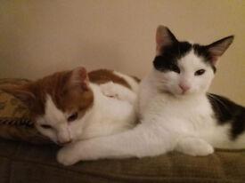 2 Kittens